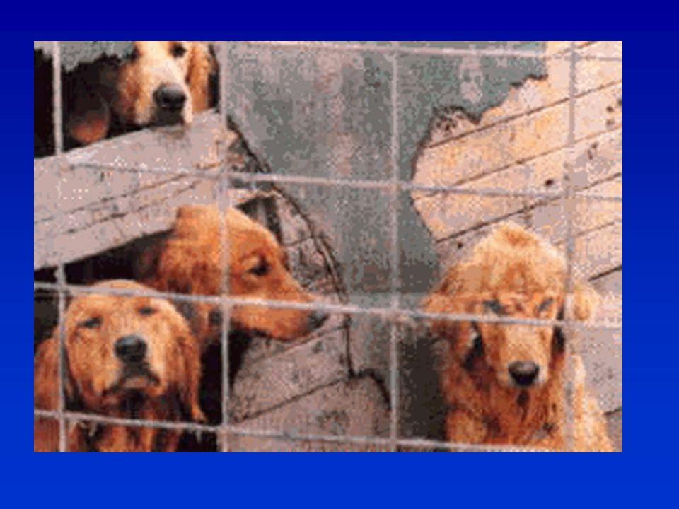 Megoldás  Standard-ek korrigálása állatvédelmi szempontból (tenyészcél=standard)  Bírálat szempontjainak meghatározása állatvédelmi aspektusból: a tenyésztő olyat tenyészt, amelyik nyer – felelősség a bírálónál.