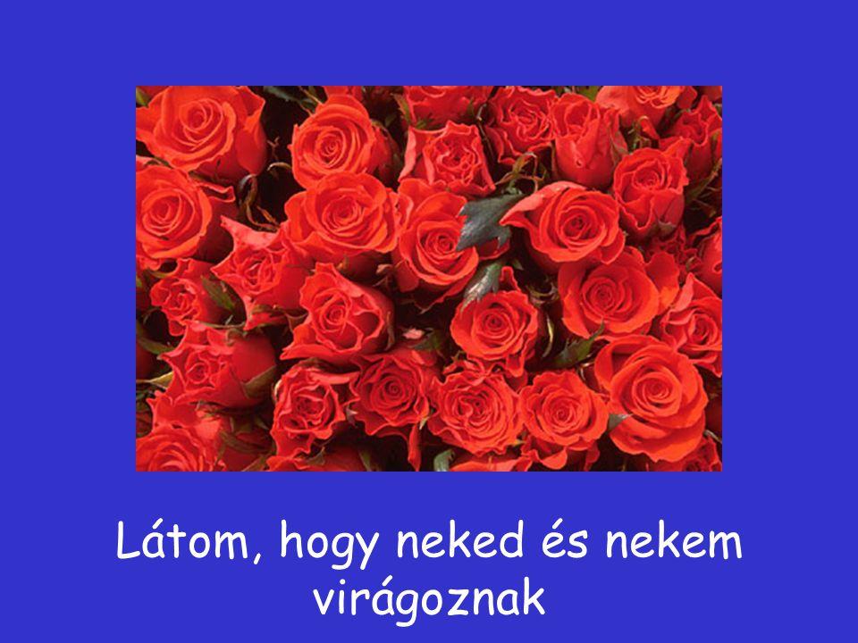 és piros rózsákat is