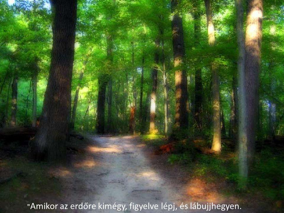 Amikor az erdőre kimégy, figyelve lépj, és lábujjhegyen.