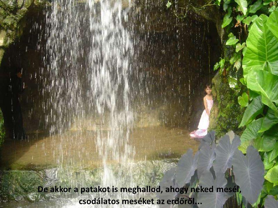 De akkor a patakot is meghallod, ahogy neked mesél, csodálatos meséket az erdőről...