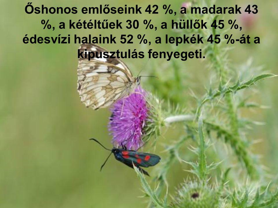 Őshonos emlőseink 42 %, a madarak 43 %, a kétéltűek 30 %, a hüllők 45 %, édesvízi halaink 52 %, a lepkék 45 %-át a kipusztulás fenyegeti.