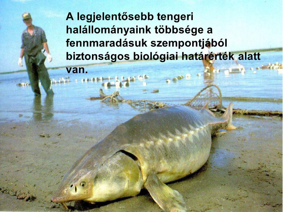 A legjelentősebb tengeri halállományaink többsége a fennmaradásuk szempontjából biztonságos biológiai határérték alatt van.
