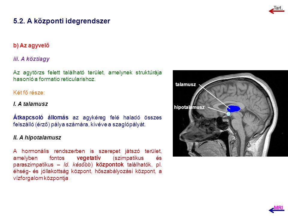 5.2. A központi idegrendszer b) Az agyvelő iii. A köztiagy Az agytörzs felett található terület, amelynek struktúrája hasonló a formatio reticularisho