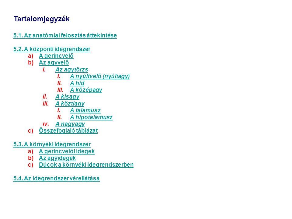 Tartalomjegyzék 5.1. Az anatómiai felosztás áttekintése 5.2. A központi idegrendszer a)A gerincvelőA gerincvelő b)Az agyvelőAz agyvelő i.Az agytörzsAz