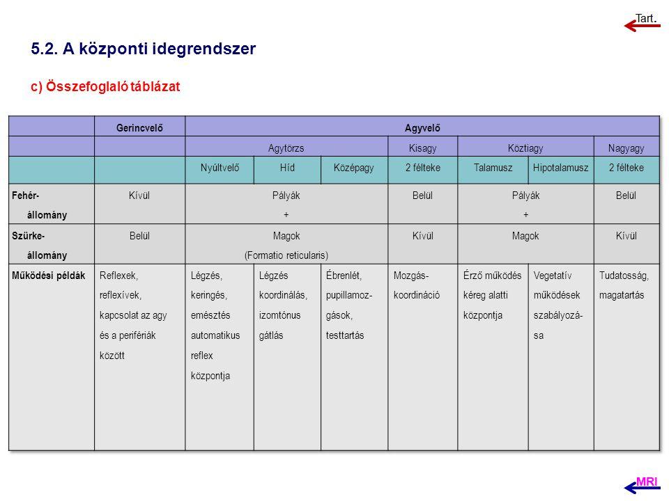 5.2. A központi idegrendszer c) Összefoglaló táblázat