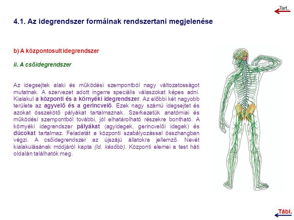 4.1.Az idegrendszer formáinak rendszertani megjelenése b) A központosult idegrendszer ii.