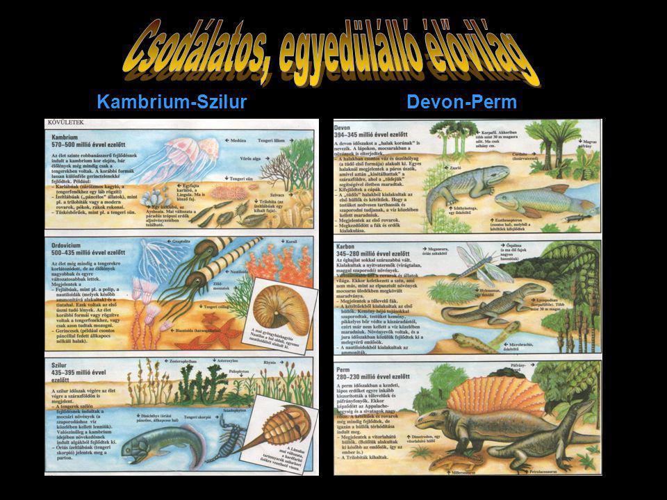 Kambrium-Szilur Devon-Perm