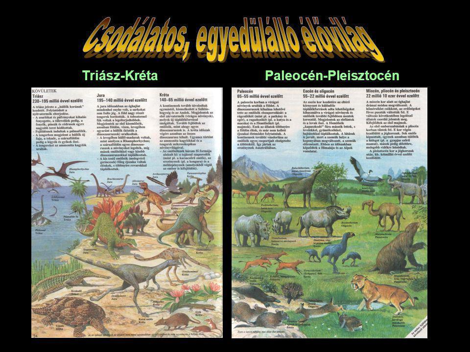 Triász-Kréta Paleocén-Pleisztocén