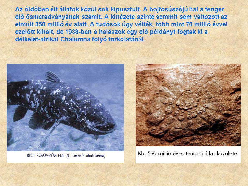 Az óidőben élt állatok közül sok kipusztult. A bojtosúszójú hal a tenger élő ősmaradványának számít. A kinézete szinte semmit sem változott az elmúlt