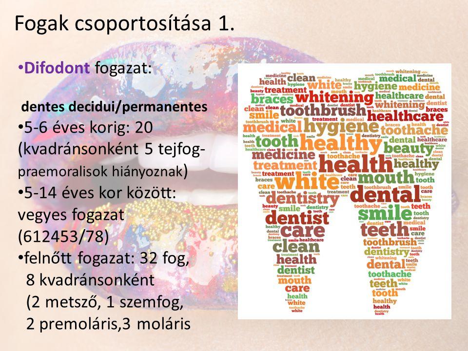 • Difodont fogazat: dentes decidui/permanentes • 5-6 éves korig: 20 (kvadránsonként 5 tejfog- praemoralisok hiányoznak ) • 5-14 éves kor között: vegye