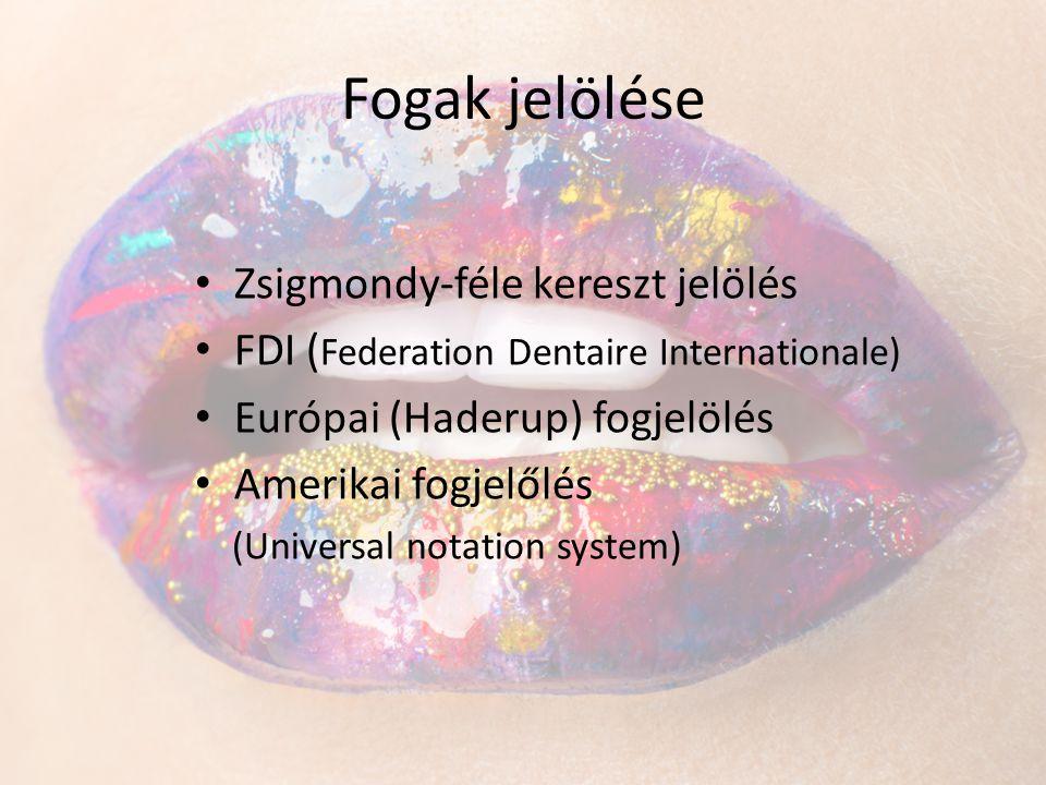 Fogak jelölése • Zsigmondy-féle kereszt jelölés • FDI ( Federation Dentaire Internationale) • Európai (Haderup) fogjelölés • Amerikai fogjelőlés (Univ