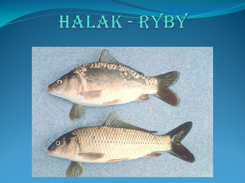 A fejlődésben lévő egyedek a vizekben, a kifejlett egyedek a szárazföldön (békák, szalamandrák), vagy a vízben (gőték) élnek.