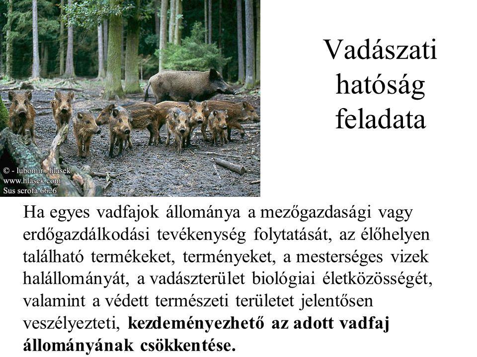 Vadászati hatóság feladata Ha egyes vadfajok állománya a mezőgazdasági vagy erdőgazdálkodási tevékenység folytatását, az élőhelyen található termékeke