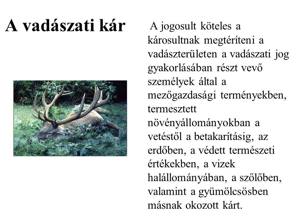 A vadászati kár A jogosult köteles a károsultnak megtéríteni a vadászterületen a vadászati jog gyakorlásában részt vevő személyek által a mezőgazdaság