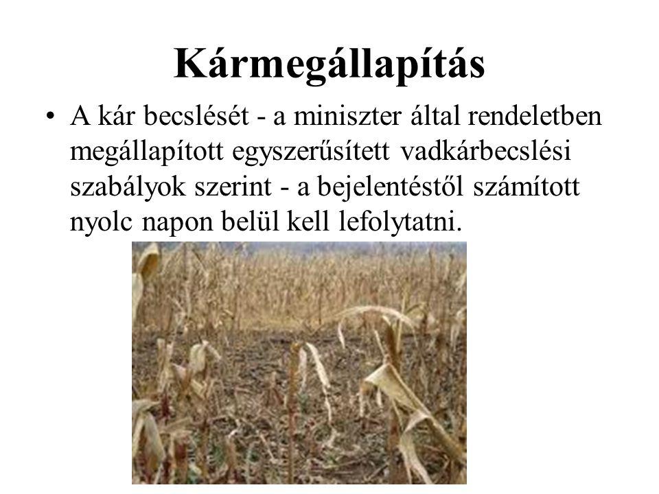 Kármegállapítás •A kár becslését - a miniszter által rendeletben megállapított egyszerűsített vadkárbecslési szabályok szerint - a bejelentéstől számí