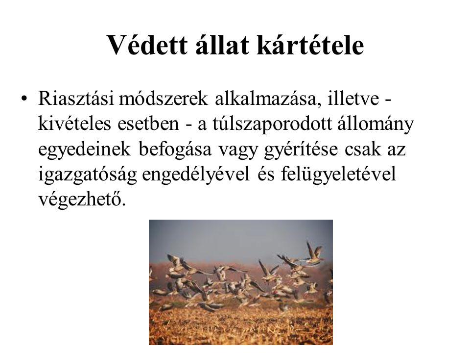 Védett állat kártétele •Riasztási módszerek alkalmazása, illetve - kivételes esetben - a túlszaporodott állomány egyedeinek befogása vagy gyérítése cs