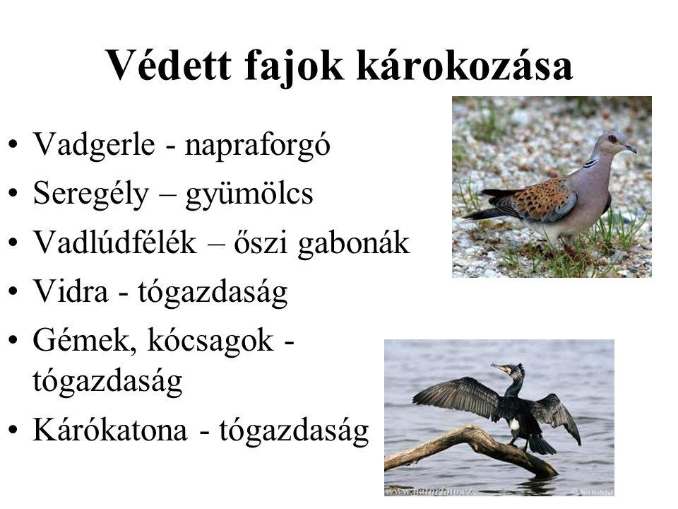 Védett fajok károkozása •Vadgerle - napraforgó •Seregély – gyümölcs •Vadlúdfélék – őszi gabonák •Vidra - tógazdaság •Gémek, kócsagok - tógazdaság •Kár