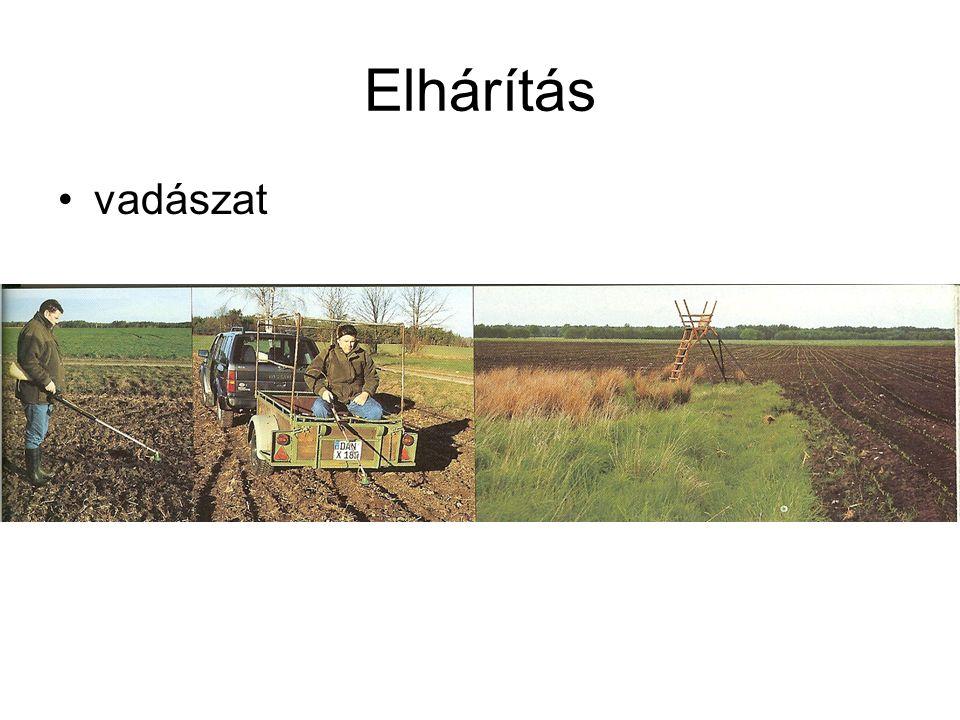 Védett fajok károkozása •Vadgerle - napraforgó •Seregély – gyümölcs •Vadlúdfélék – őszi gabonák •Vidra - tógazdaság •Gémek, kócsagok - tógazdaság •Kárókatona - tógazdaság