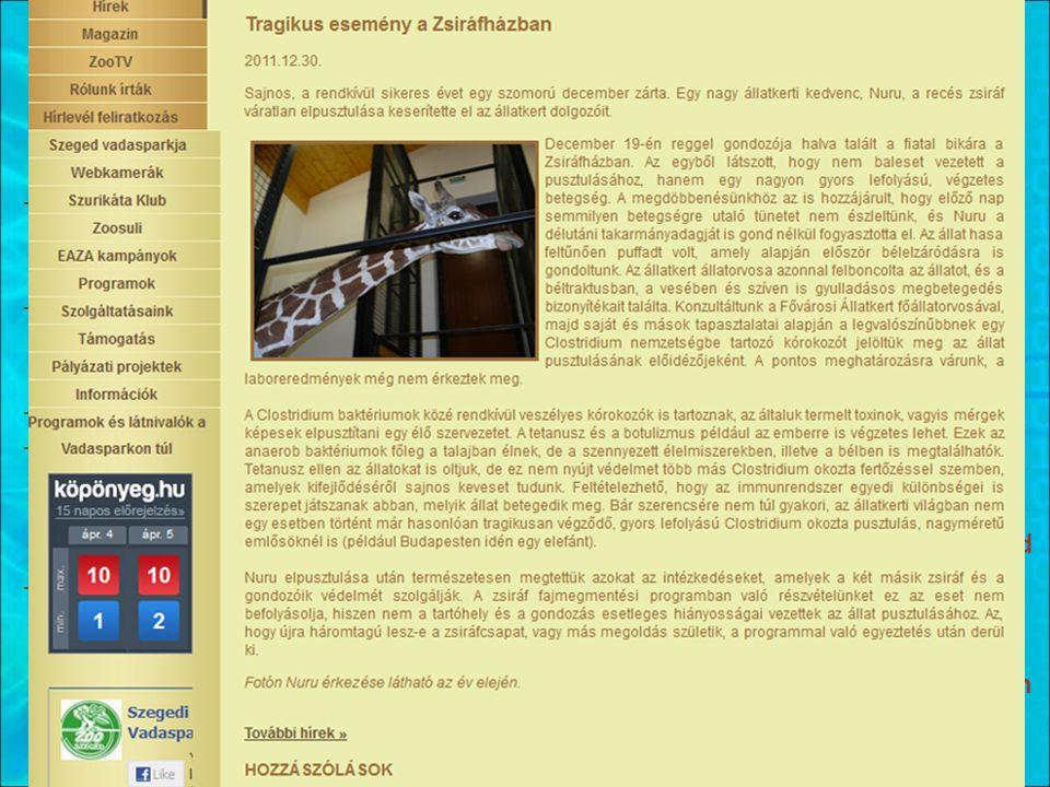 Hírt adunk We create the news -Hírlevél, honlap, közösségi oldalak (pl.