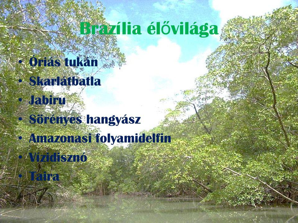 Brazília nevezetességei Természeti világörökségek: • Atlanti-parti Es ő erd ő Rezervátum • Atlanti-parti Délkeleti Es ő erd ő Rezervátumok • Brazil atlanti-óceáni szigetek: Fernando de Noronha és Rocas-atoll rezervátumok • Közép-amazóniai Természetvédelmi Területek • Iguaçu Nemzeti Park • Pantanal Természetvédelmi Terület