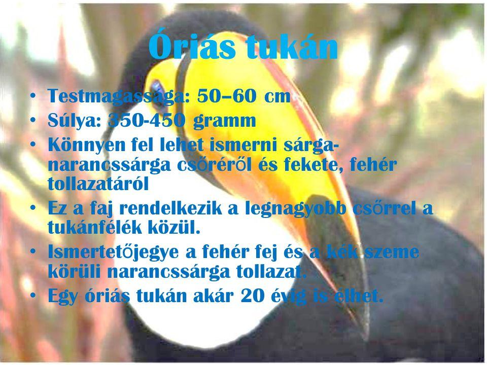 Óriás tukán • Testmagassága: 50–60 cm • Súlya: 350-450 gramm • Könnyen fel lehet ismerni sárga- narancssárga cs ő rér ő l és fekete, fehér tollazatáról • Ez a faj rendelkezik a legnagyobb cs ő rrel a tukánfélék közül.