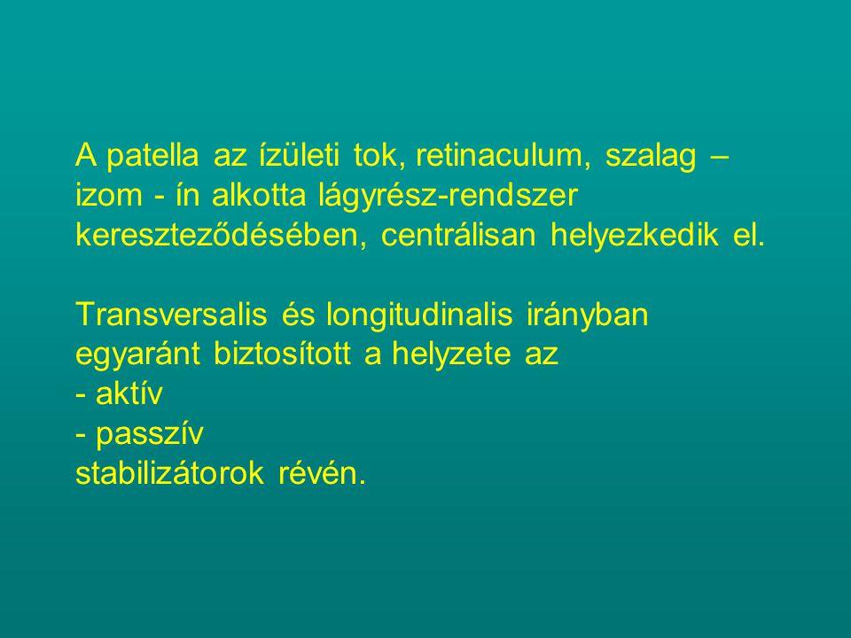 A patella az ízületi tok, retinaculum, szalag – izom - ín alkotta lágyrész-rendszer kereszteződésében, centrálisan helyezkedik el. Transversalis és lo