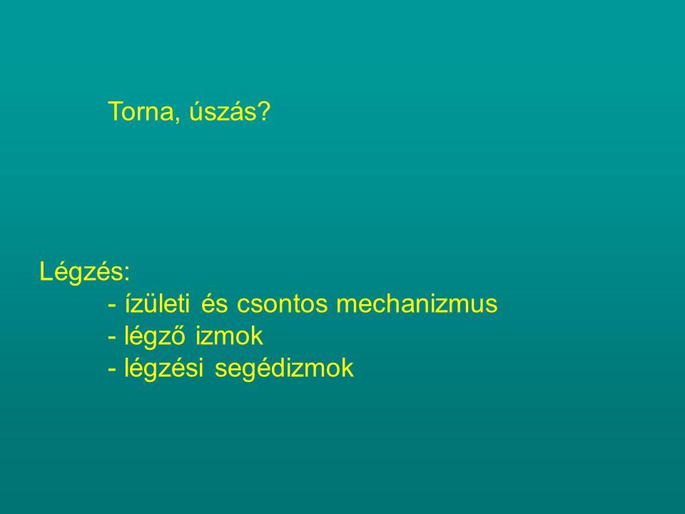 Torna, úszás? Légzés: - ízületi és csontos mechanizmus - légző izmok - légzési segédizmok