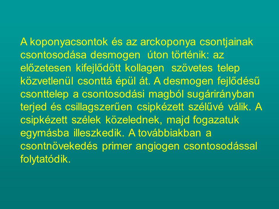 MELLKASDEFORMITÁSOK Aetiológia: genetikai meghatározottság (mesenchymalis csíratelep) Domináns vagy recessiv öröklésmenet Kóroktanilag a deformitás létrejöttében a bordák túlnövekedése a döntő tényező.