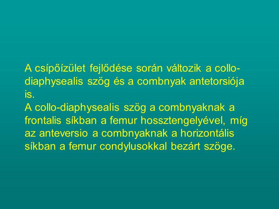 A csípőízület fejlődése során változik a collo- diaphysealis szög és a combnyak antetorsiója is. A collo-diaphysealis szög a combnyaknak a frontalis s