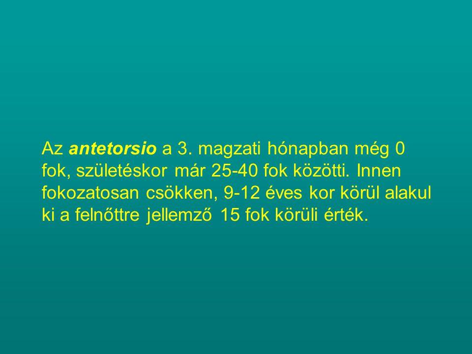 Az antetorsio a 3. magzati hónapban még 0 fok, születéskor már 25-40 fok közötti. Innen fokozatosan csökken, 9-12 éves kor körül alakul ki a felnőttre