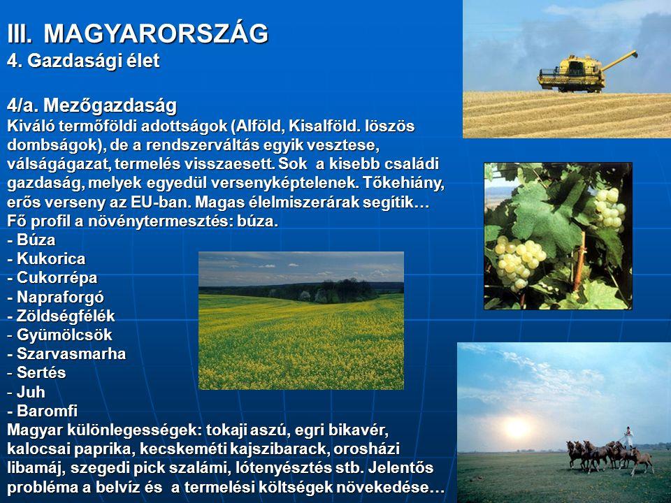 III. MAGYARORSZÁG 4. Gazdasági élet 4/a. Mezőgazdaság Kiváló termőföldi adottságok (Alföld, Kisalföld. löszös dombságok), de a rendszerváltás egyik ve