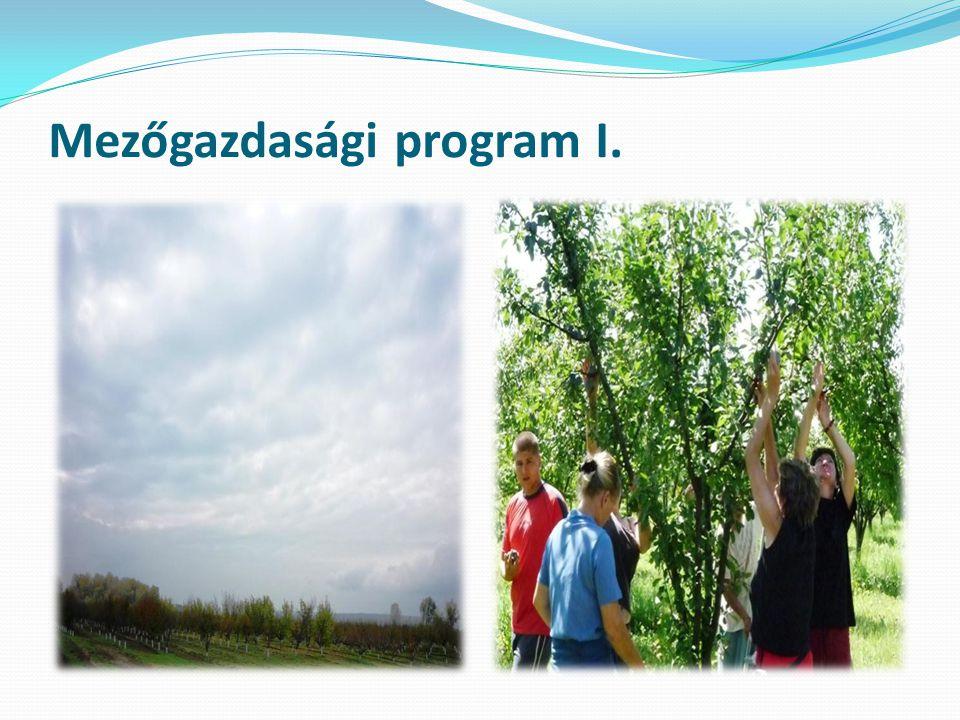 Mezőgazdasági program II.