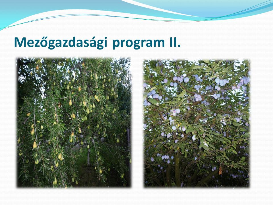 Mezőgazdasági program III.