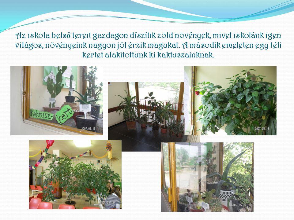 Az iskola bels ő tereit gazdagon díszítik zöld növények, mivel iskolánk igen világos, növényeink nagyon jól érzik magukat. A második emeleten egy téli