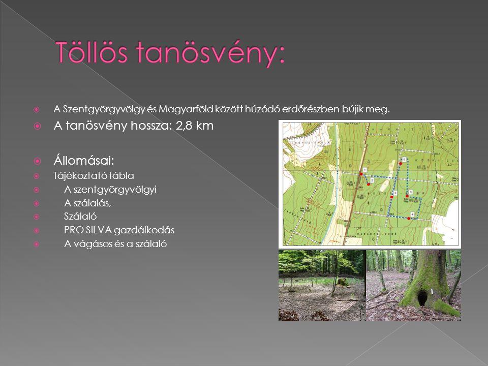 A Szentgyörgyvölgy és Magyarföld között húzódó erdőrészben bújik meg.  A tanösvény hossza: 2,8 km  Állomásai:  Tájékoztató tábla  A szentgyörgyv