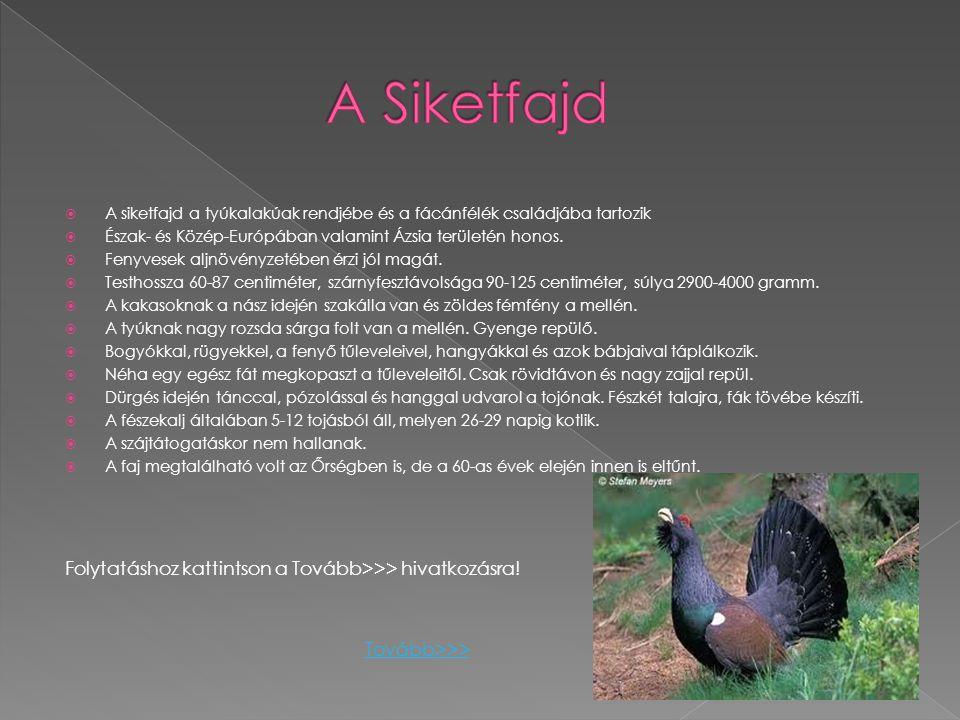 AA siketfajd a tyúkalakúak rendjébe és a fácánfélék családjába tartozik ÉÉszak- és Közép-Európában valamint Ázsia területén honos. FFenyvesek al