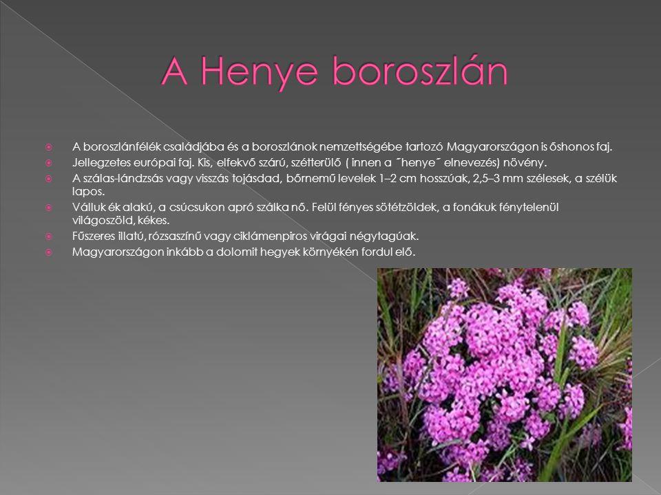  A boroszlánfélék családjába és a boroszlánok nemzettségébe tartozó Magyarországon is őshonos faj.  Jellegzetes európai faj. Kis, elfekvő szárú, szé