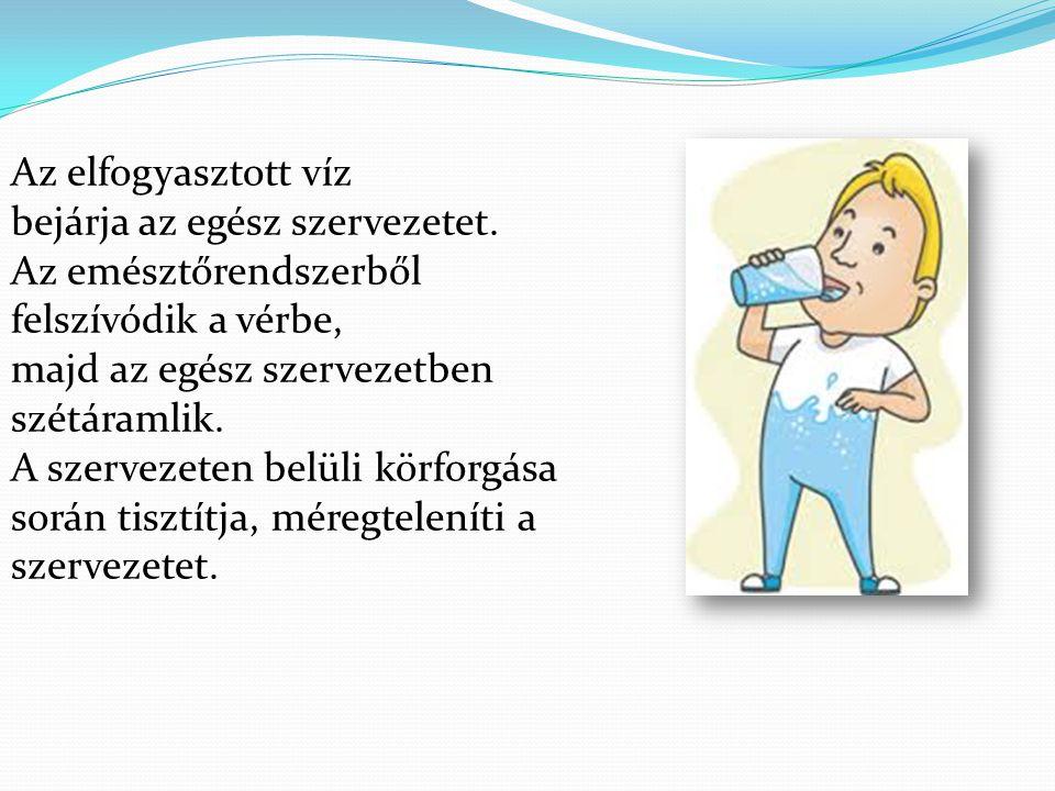 Az elfogyasztott víz bejárja az egész szervezetet. Az emésztőrendszerből felszívódik a vérbe, majd az egész szervezetben szétáramlik. A szervezeten be