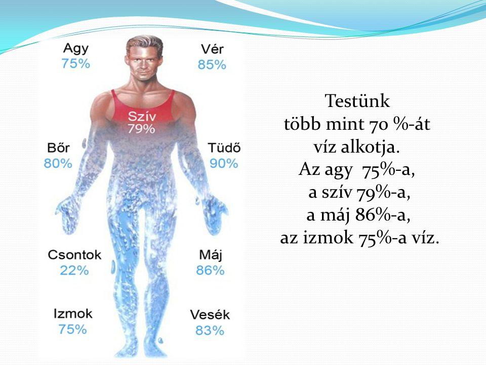 Testünk több mint 70 %-át víz alkotja. Az agy 75%-a, a szív 79%-a, a máj 86%-a, az izmok 75%-a víz.