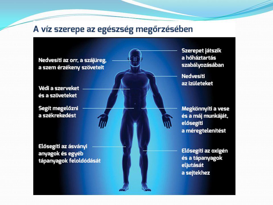 Napi 1400 liter víz folyik át agyunkon és 2000 liter víz mossa át a vesénket.