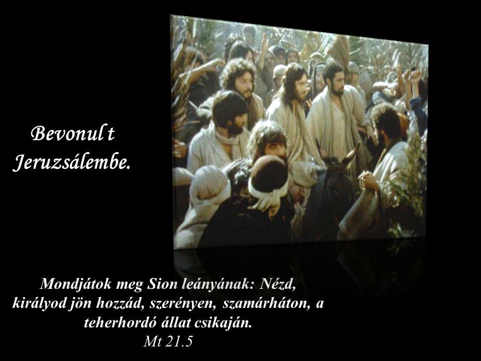 Mondjátok meg Sion leányának: Nézd, királyod jön hozzád, szerényen, szamárháton, a teherhordó állat csikaján.