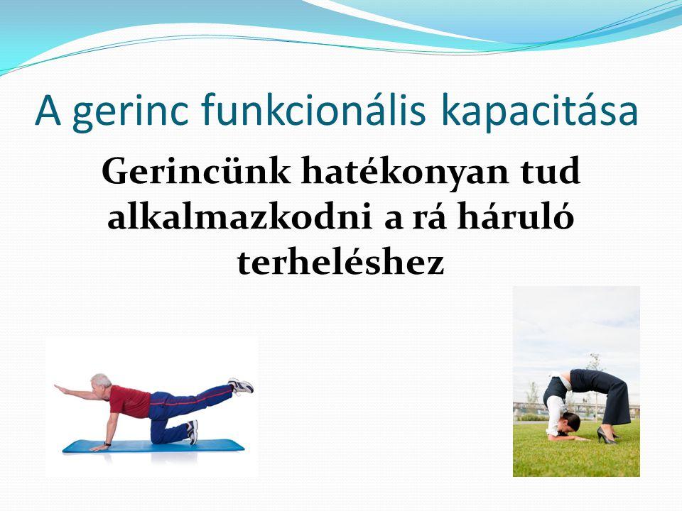 A gerinc funkcionális kapacitása Gerincünk hatékonyan tud alkalmazkodni a rá háruló terheléshez