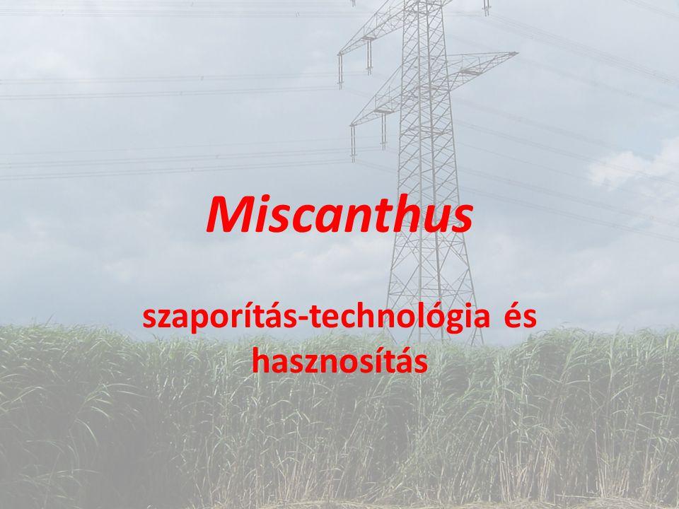 Miscanthus szaporítás-technológia és hasznosítás