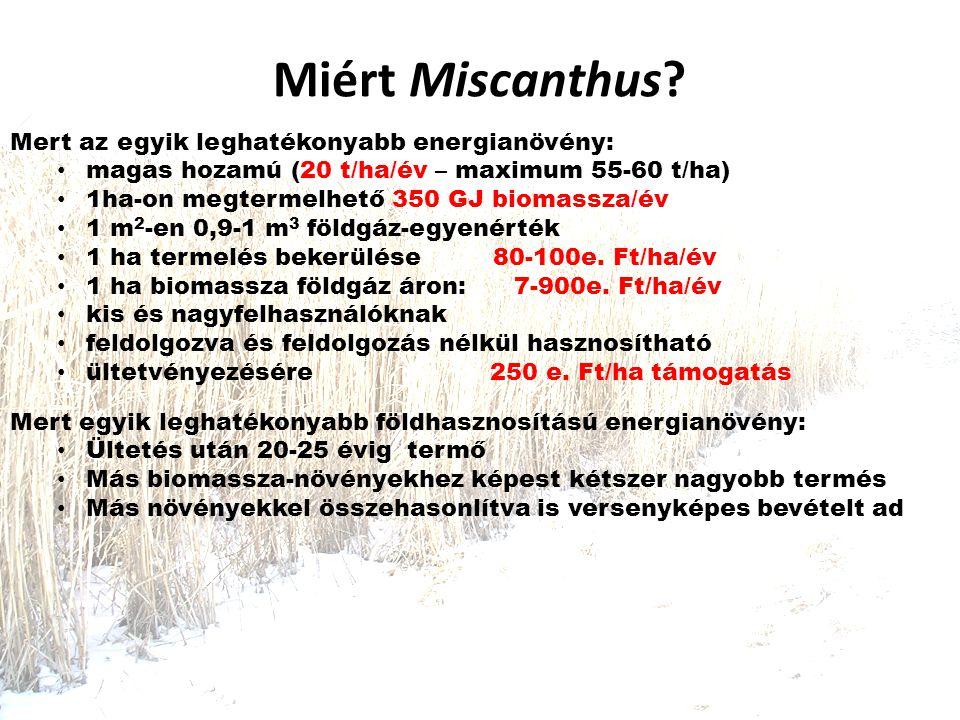 Miért Miscanthus.