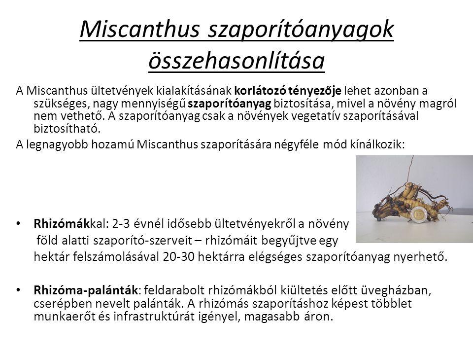 Miscanthus szaporítóanyagok összehasonlítása A Miscanthus ültetvények kialakításának korlátozó tényezője lehet azonban a szükséges, nagy mennyiségű szaporítóanyag biztosítása, mivel a növény magról nem vethető.