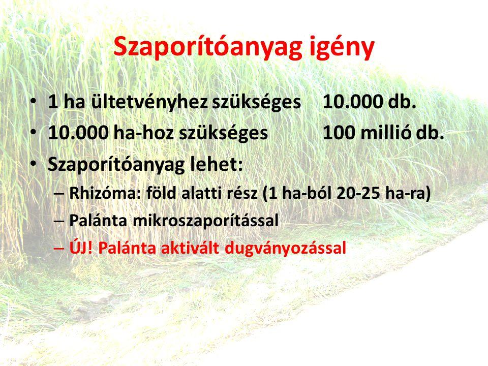 Szaporítóanyag igény • 1 ha ültetvényhez szükséges 10.000 db.