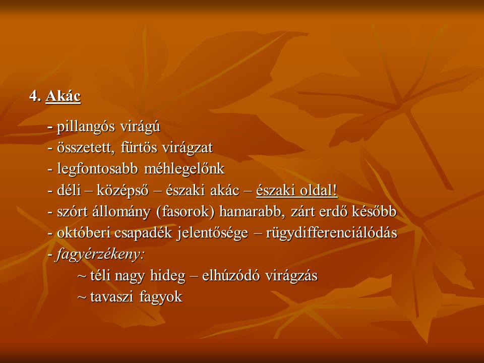 4. Akác - pillangós virágú - összetett, fürtös virágzat - legfontosabb méhlegelőnk - déli – középső – északi akác – északi oldal! - szórt állomány (fa