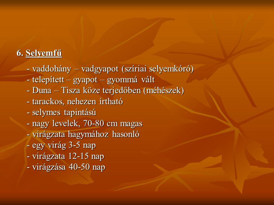 6. Selyemfű - vaddohány – vadgyapot (szíriai selyemkóró) - telepített – gyapot – gyommá vált - Duna – Tisza köze terjedőben (méhészek) - tarackos, neh