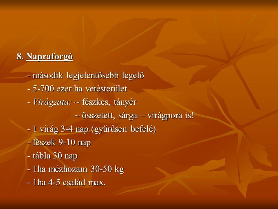 8. Napraforgó - második legjelentősebb legelő - 5-700 ezer ha vetésterület - Virágzata: ~ fészkes, tányér ~ összetett, sárga – virágpora is! ~ összete