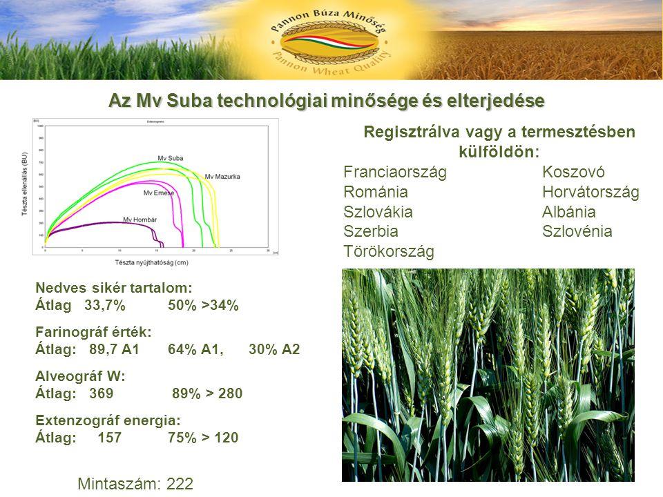 Az Mv Suba technológiai minősége és elterjedése Nedves sikér tartalom: Átlag 33,7% 50% >34% Farinográf érték: Átlag: 89,7 A164% A1, 30% A2 Alveográf W